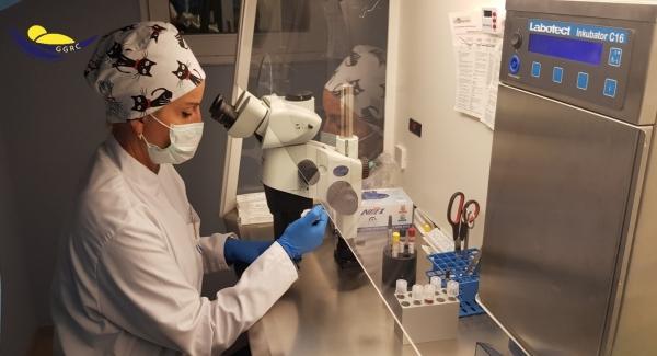პრეიმპლანტაციური დიაგნოსტიკა- როგორ განვსაზღვროთ გენეტიკური დაავადებების რისკი IVF მეთოდით განაყოფიერებისას